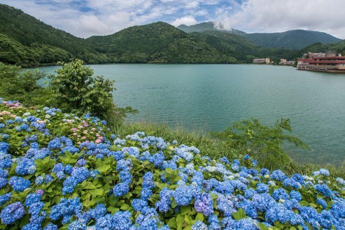 雲仙(長崎県島原半島)のおしどりの池(あじさい)