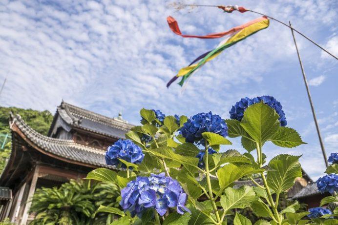 興福寺(長崎市寺町、唐寺)の紫陽花季(あじさい)