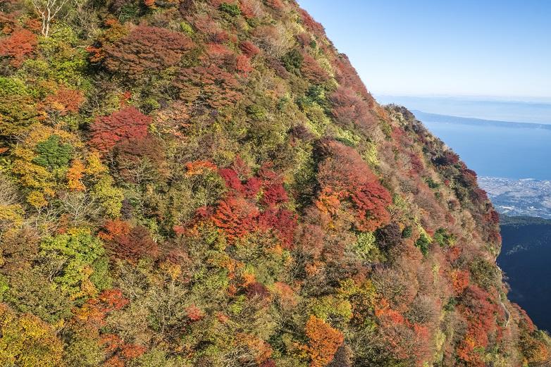 雲仙ロープウェイ(長崎県仁田峠)と紅葉、妙見岳(妙見岳南斜面)