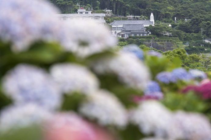 魚津ヶ崎公園(五島市岐宿町)のあじさい、水ノ浦教会