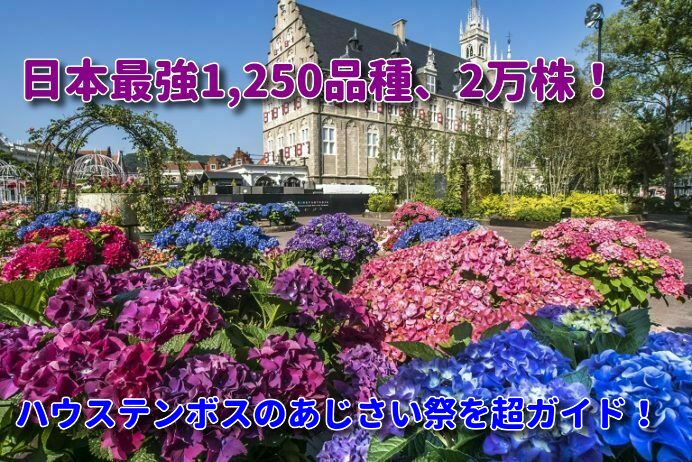 「ハウステンボスのあじさい祭」【心震える2万本!】見どころ・見頃を超ガイド