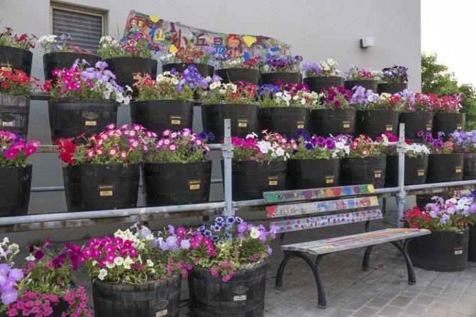 小浜温泉(長崎県雲仙市)の花々