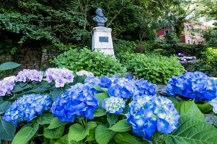 シーボルト記念館(長崎市鳴滝)、ながさき紫陽花(あじさい)まつり