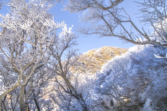 雲仙岳登山道(長崎県島原半島)の霧氷
