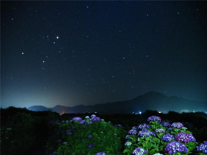 魚津ヶ崎公園(五島市岐宿町)のあじさい、ライトアップ