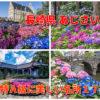 【見頃速報2021】「長崎県 アジサイの名所」~達人が選ぶ18スポット