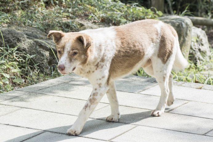 雲仙地獄(長崎県雲仙市小浜町)の犬