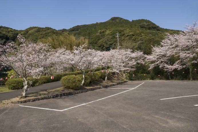 御橋観音 石橋、牧の岳公園(長崎県佐世保市吉井町)の桜と花見