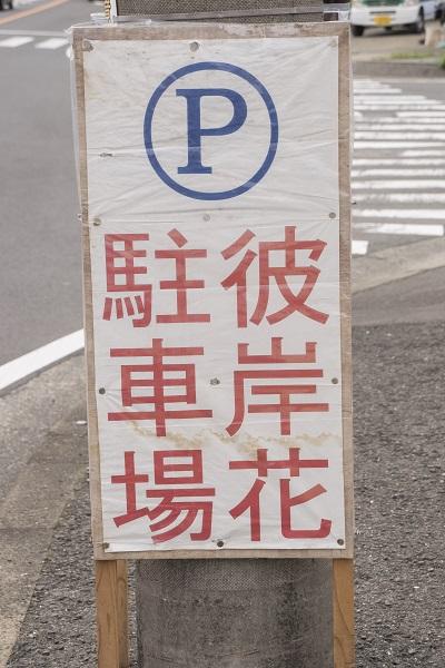琴海戸根町、社が丘花園公園のヒガンバナ(彼岸花)、長崎市の駐車場