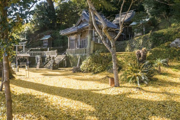 裳着神社(長崎市茂木町)の紅葉、夫婦銀杏