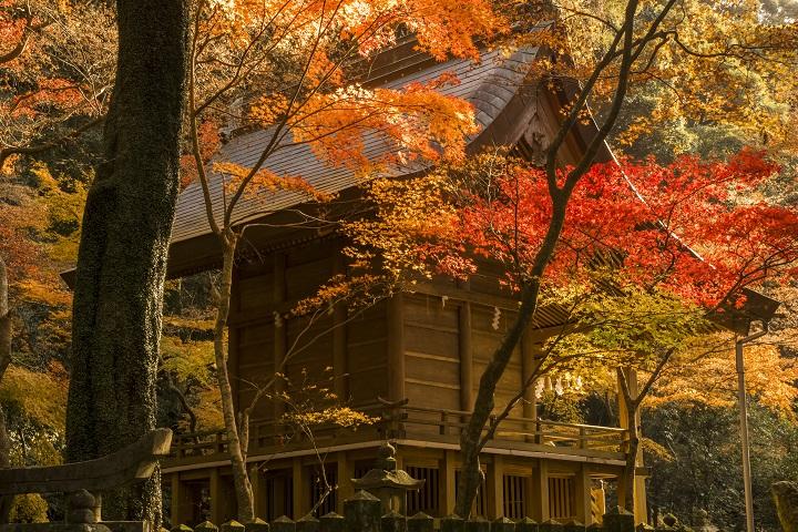「金比羅神社の紅葉」(長崎市)【見頃はいつ?駐車場はココ!】~ハイキングがてらに堪能!