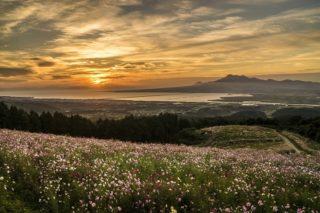 「白木峰高原のコスモス2019」【正確な開花情報】で20万本の満開風景を堪能!