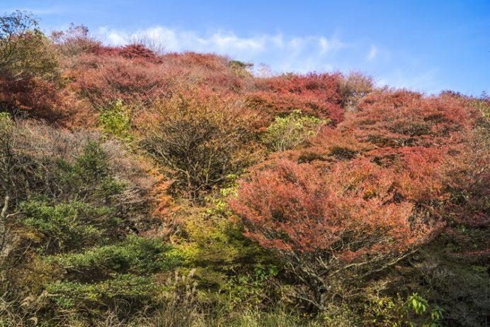 雲仙岳登山道(長崎県)、野岳の紅葉