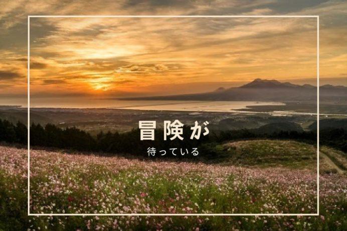 長崎県のコスモス、白木峰高原