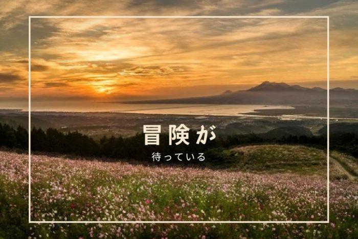 長崎のコスモス 名所12選【2021見頃速報!】~見どころを超解説ッ