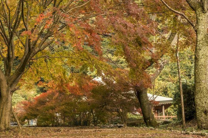 御橋観音 石橋(長崎県佐世保市吉井町)の紅葉