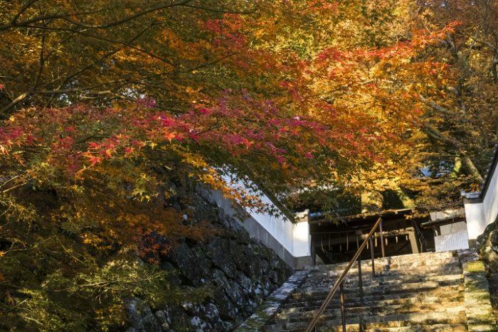 妙光寺の紅葉【2021見頃速報】(長崎)~絶対オススメの穴場