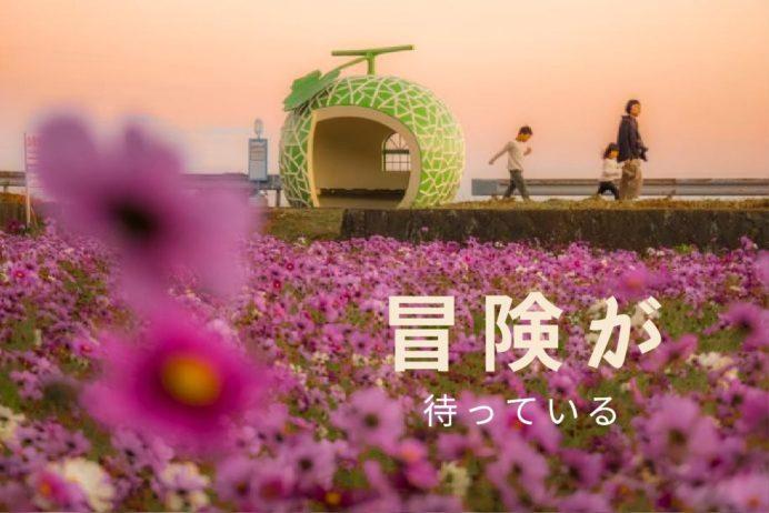 長崎県のコスモス 総まとめ!