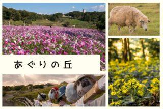 あぐりの丘 15万本のコスモス【見頃速報2021】~秋バラ、里山も満喫しよう
