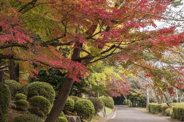 野岳湖公園(大村市)の紅葉