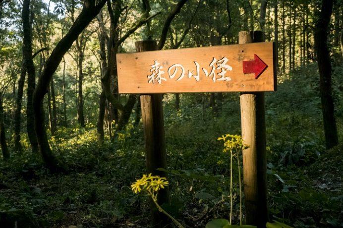 あぐりの丘(長崎市四杖町)のつわぶき