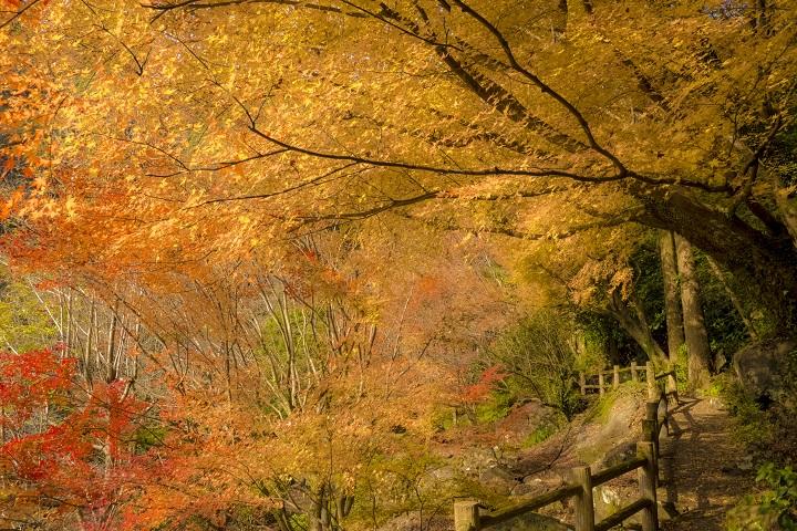 「潜竜ヶ滝公園の紅葉」【見頃情報あり!】~県北の穴場SPOT