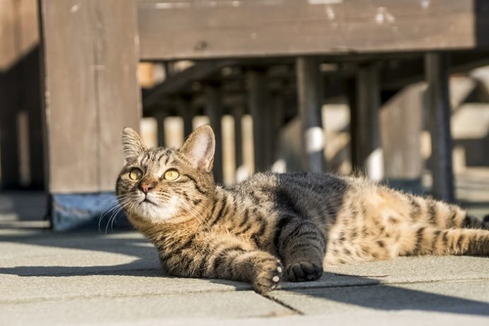 雲仙地獄(長崎県雲仙市小浜町)の猫