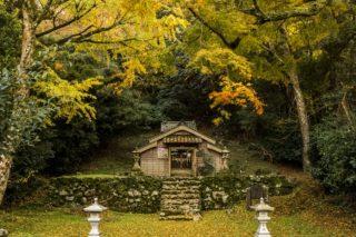 「吉田大明神社叢の紅葉」(佐世保市吉井町)圧巻のイロハモミジ群