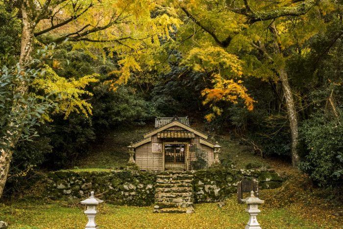 吉田大明神社叢の紅葉(佐世保)圧巻のイロハモミジ群