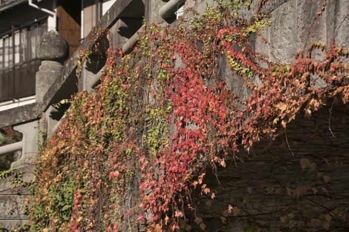 古川橋(中島川石橋群)の紅葉