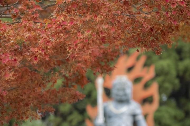 西光寺(佐世保市上柚木町)の紅葉