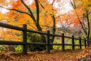 「野岳湖公園の紅葉」(大村市)【家族連れにピッタシ!】見頃情報付