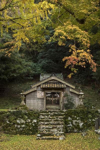吉田大明神社叢の紅葉(佐世保市吉井町)県指定天然記念物
