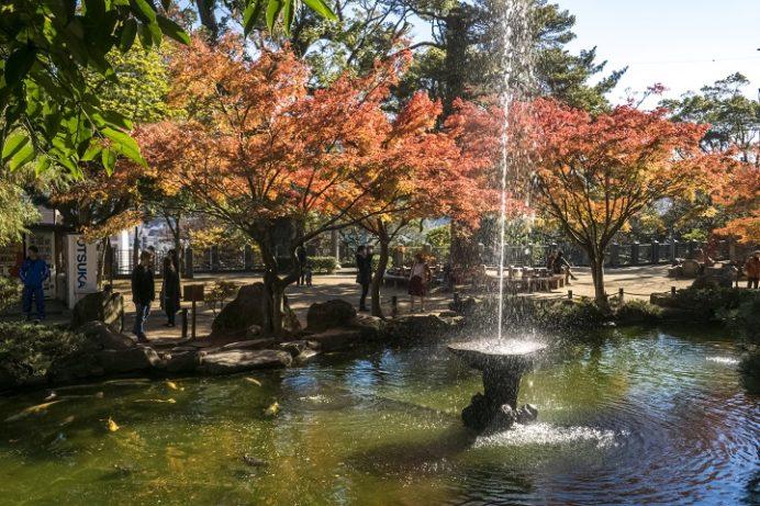 長崎公園の紅葉(長崎市上西山町)