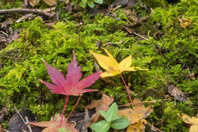 瑠璃光山 妙相寺(長崎市本河内)の紅葉