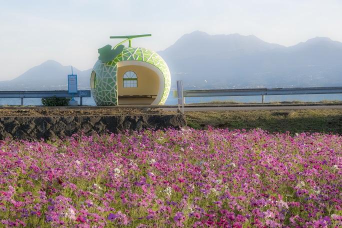 フルーツバス停(長崎県諫早市小長井)、コスモス