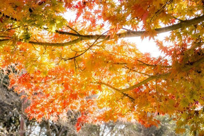 稲佐山公園(長崎市)の紅葉