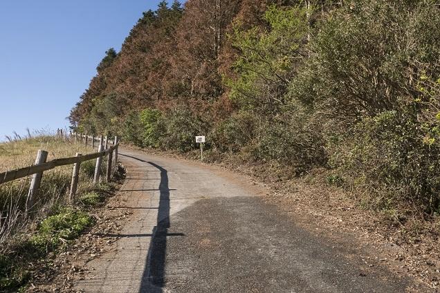 あぐりの丘(長崎市四杖町)の里山