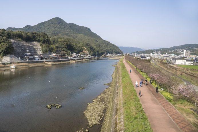 河津桜・シロウオまつり(長崎県北松浦郡佐々町)
