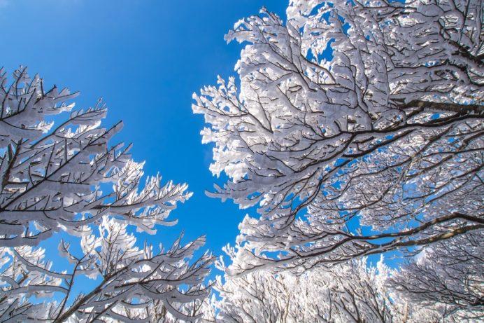 「雲仙の霧氷」【絶対に見れる条件・時期は?】登山経験者が解説!