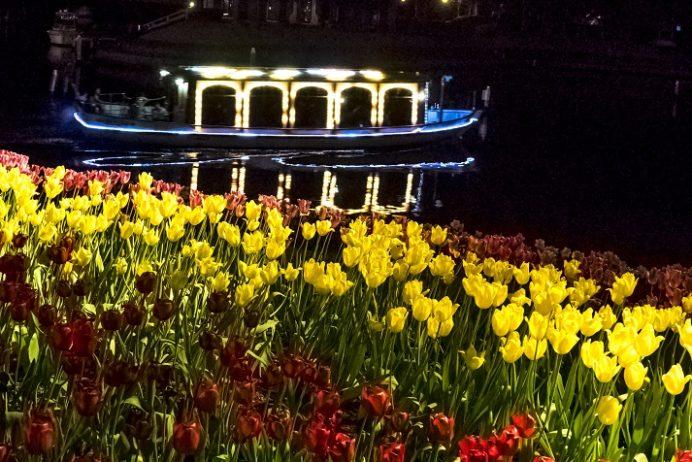 ハウステンボスのチューリップ祭(長崎県佐世保市)、夜間ライトアップ