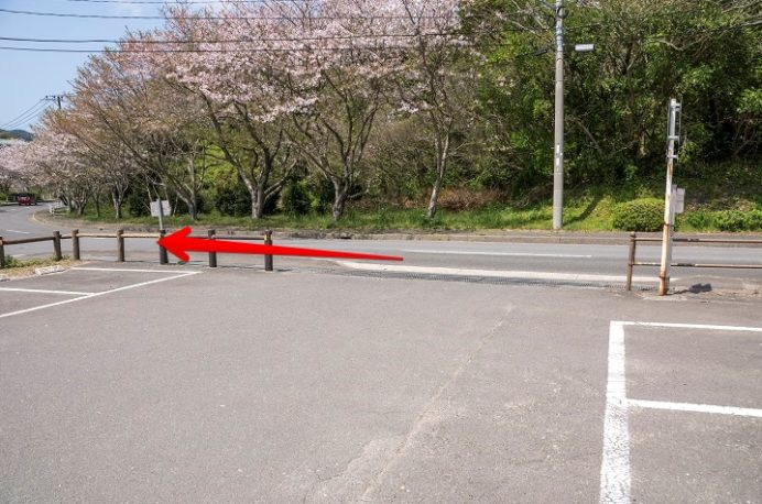 桜の里、三京グリーンランド埋め立て処分場(長崎市三京町)の桜