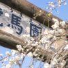 【2021年見頃は?】「原種梅林 虎馬園」(長崎市松原町)~素晴らしい!ここは梅のパラダイス