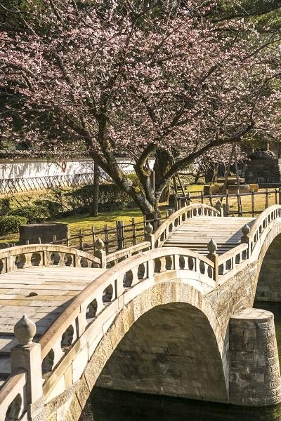 諫早公園の大寒桜、諫早眼鏡橋