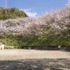 「三川公園で花見」(長崎市)【穴場SPOT!桜の見頃はいつ?】