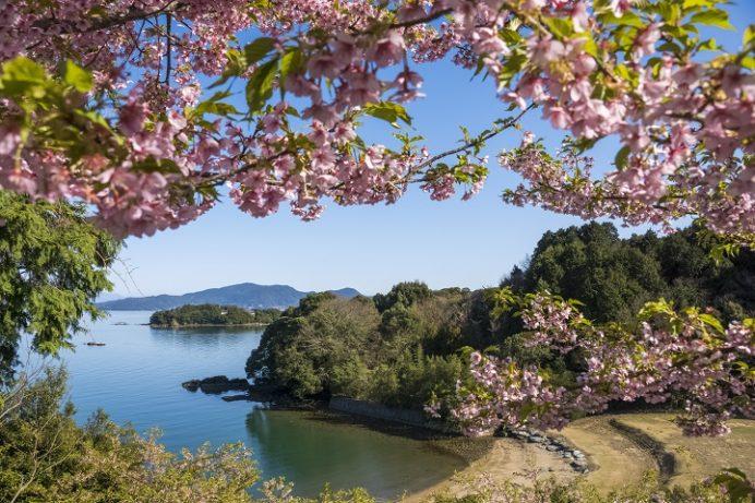 パサージュ琴海の河津桜(長崎県長崎市)