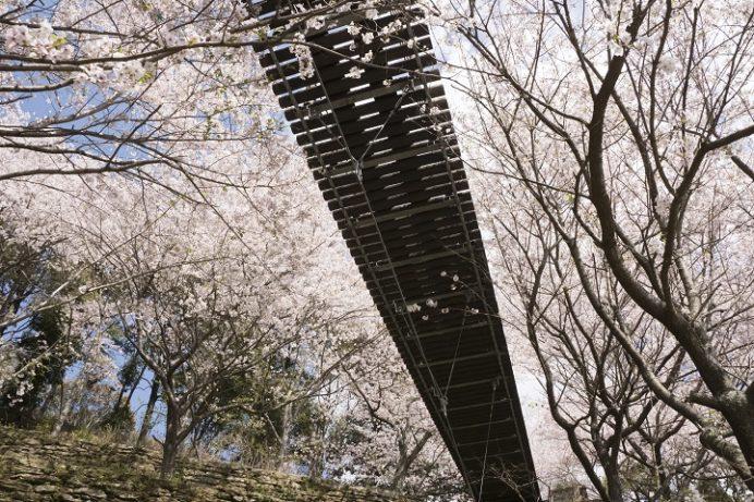 琴海中央公園(長崎市琴海戸根)の桜、花見
