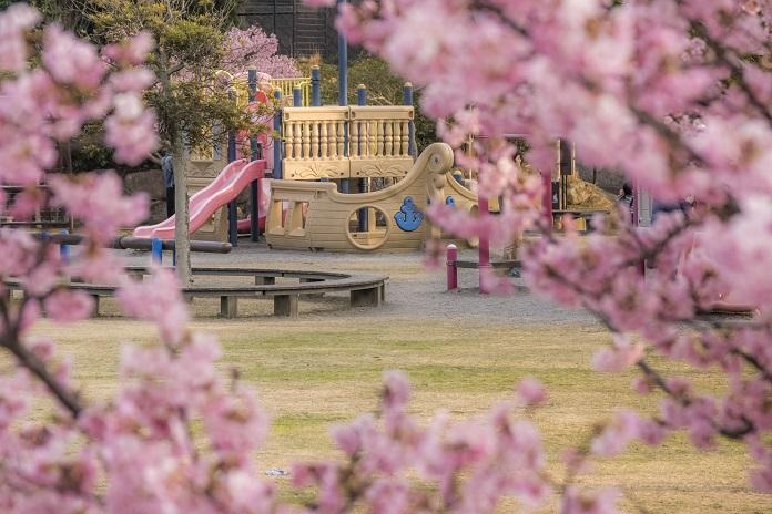 「大村久原公園の河津桜2020」【見頃はいつ?】~家族でのお出かけに最適!