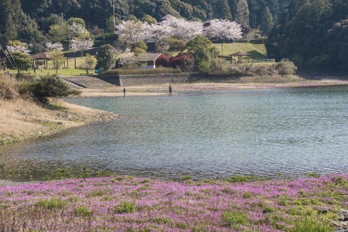 野岳湖公園(大村市)の桜と花見