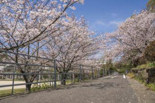 「元宮公園の桜」(長崎市三和地区)【ファミリーに最適の花見SPOT】~遊具充実、駐車場&BBQ施設あり